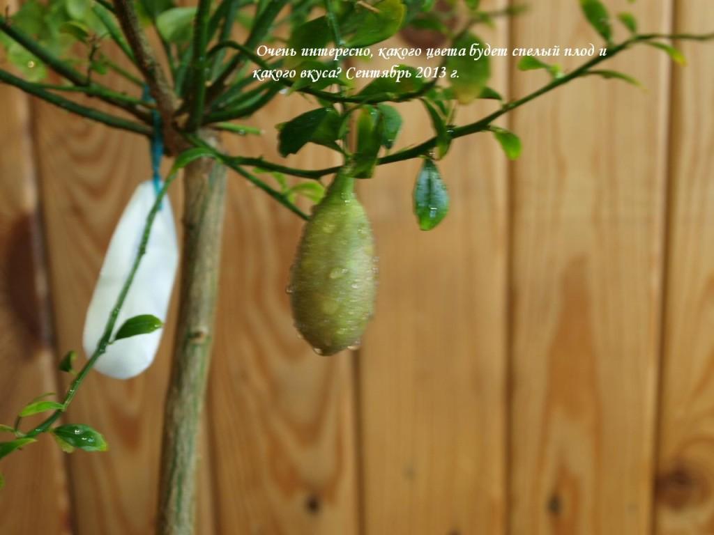 Плод немного потемнел, покоричневел