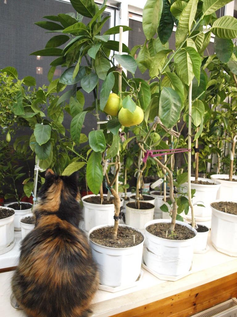 Кошка Коня среди растительности.