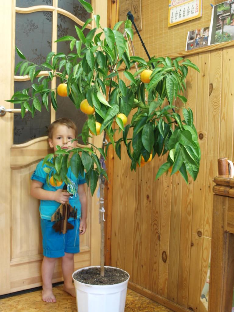 Внук Тима - 3 года-под деревом.