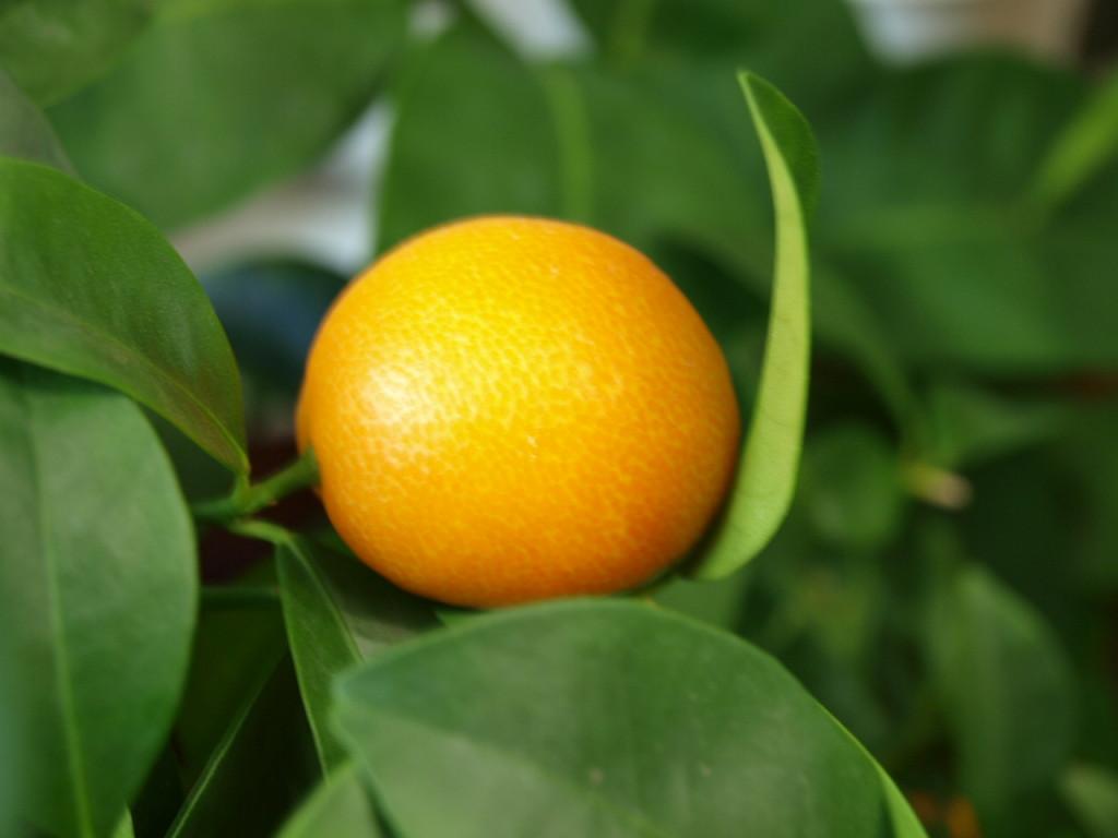 Еще плоды