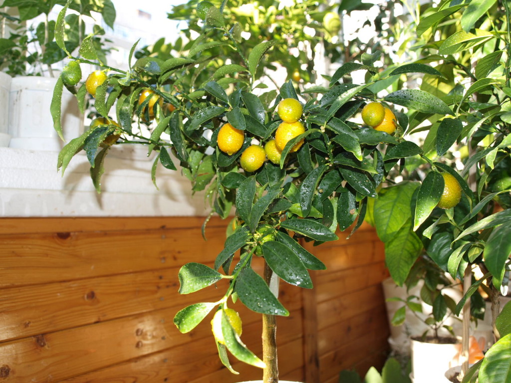 Ноябрь 2011 года. Первый урожай.
