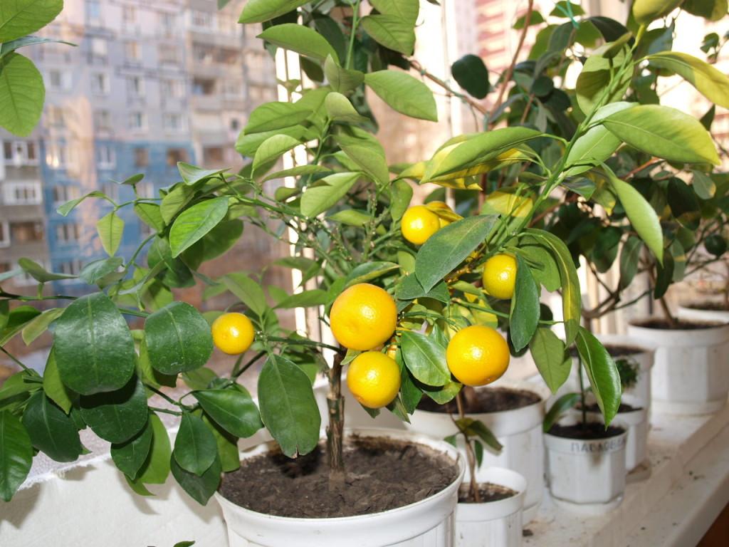 Первые плоды моего урожая. Декабрь 2010 г.